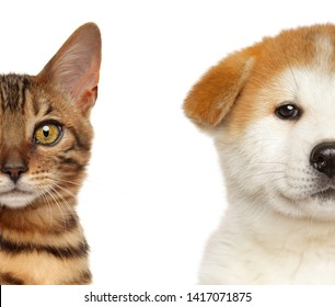 Kitten and Puppy Half Face, Isolated White background. Baby animal theme