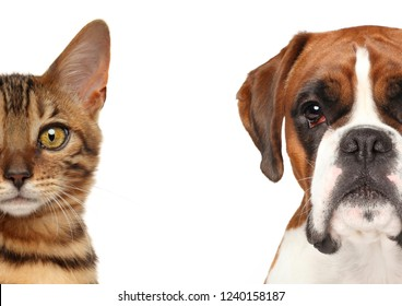 Kitten and puppy. Half of muzzle close up portrait isolated on a white background
