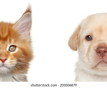Kitten and puppy. Half of muzzle close-up portrait on a white background