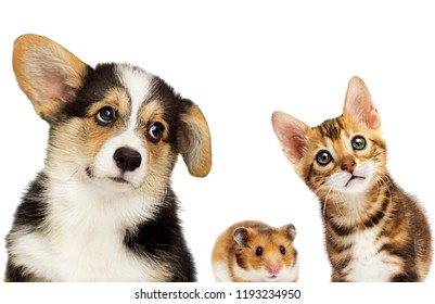 kitten and puppy and hamster