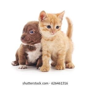 Kitten and puppy isolated on a white background.