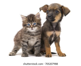 Puppy And Kitten Images Stock Photos Vectors Shutterstock