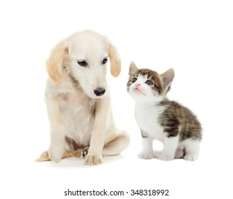 kitten and puppy looking on a white background
