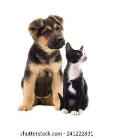 kitten and puppy looking sideways