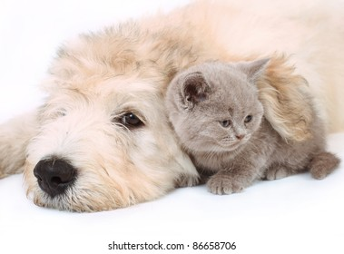 Kitten and puppy on white background.