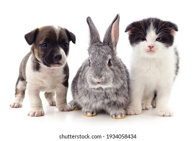Kitten and puppy and rabbit isolated on a white background.
