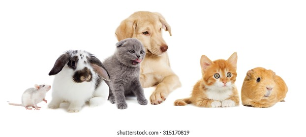 kitten and puppy and rodents,  group