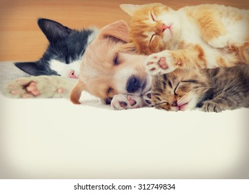 kitten and puppy sleeping together