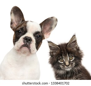 Kitten and puppy together, isolated on white background. Baby animal theme