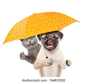 Kitten and puppy with umbrella. isolated on white background