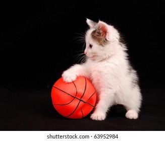 kitten put a paw on the basketball ball