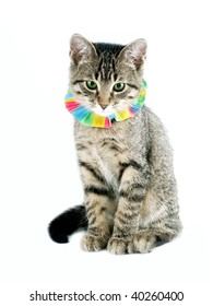 Kitten ready for a party