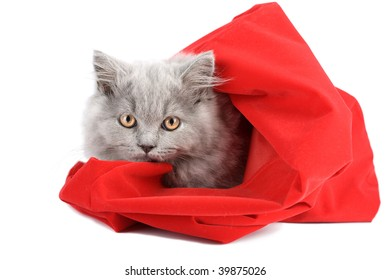 kitten in red bag isolated