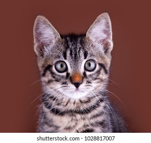 Kitten with a red nose, portrait