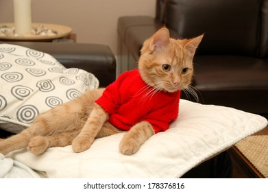 Kitten is resting on a pillow, wearing a red sweater.