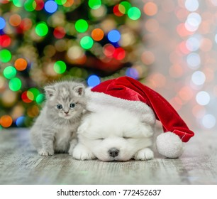 Kitten and samoyed puppy in red santa hat  on a background of the Christmas tree