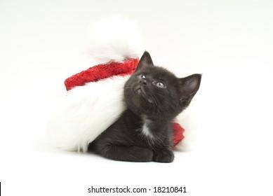 kitten with santa 's cap