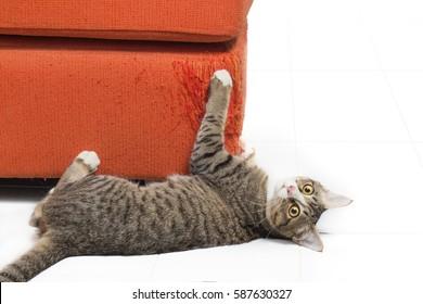 Kitten scratching orange fabric sofa on white background