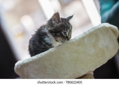kitten sit on a shelf   in an animal shelter