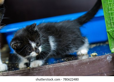 kitten sit on a shelf in a cage  in an animal shelter