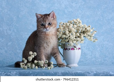 The kitten sits near a vase with flowers