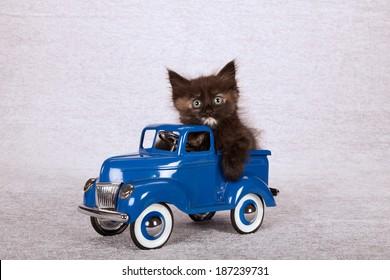 Kitten sitting inside blue toy truck car on silver background