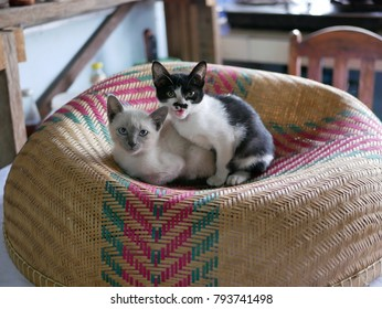 A Kitten Sitting on a Bamboo Mesh Food Cover