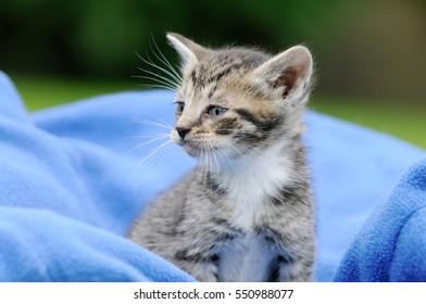 kitten sitting on blue blanket