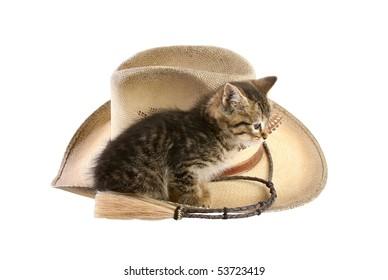 Kitten sitting on cowboy hat