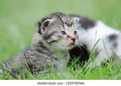 kitten sitting on meadow
