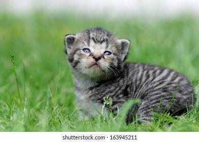 kitten sitting on the meadow