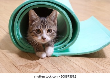 Kitten sitting on a yoga mat. The cat is on the mat for yoga, fitness