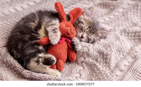 Kitten sleep on cozy blanket hug toy easter bunny. Fluffy tabby kitten snoozing comfortably with plush rabbit hare on knitted pink bed. Cat sweet dreams Copy space