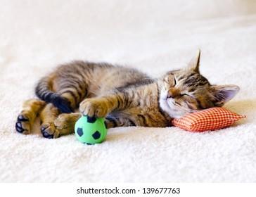 Kitten sleeping on a pillow with a soccer ball