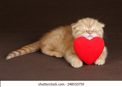 Kitten sleeps on the heart