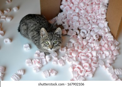 Kitten in spilled box of packing peanuts