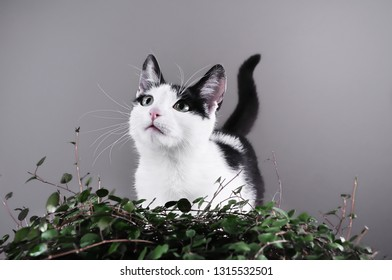 Kitten standing near green plant, looking up and wating