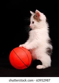 kitten standing on an orange ball