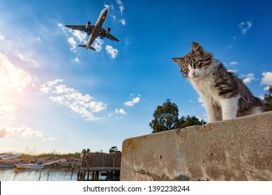 Kitten standing outdoor with an airplane passing over it's head.