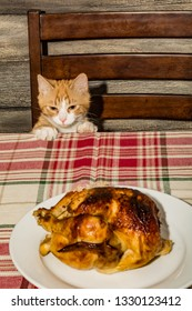 Kitten Stealing Holiday Dinner