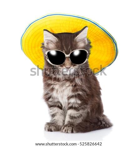 7f70bd0f Kitten Sunglasses Summer Hat Isolated On Stock Photo (Edit Now ...