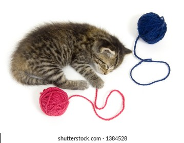 A kitten takes a nap after playing with a ball of yarn. This kitten is one of several being raised on a farm in central Illinois.