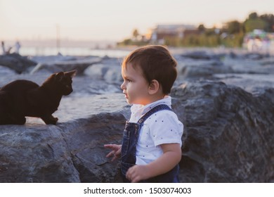 Kitten and toddler looking each other on rocks during sunset