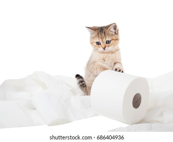 Kitten and toilet paper. Isolated on white background