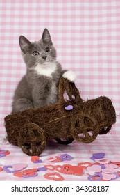 Kitten in toy car