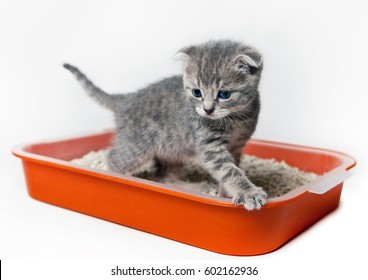 The kitten in the tray. Housebreaking.