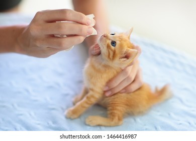 Kitten at vet clinic. Little baby cat at checkup and vaccination. Medical examination of young animal. Pet care. Doctor checking cats. Vaccine and medicine in syringe for kittens.