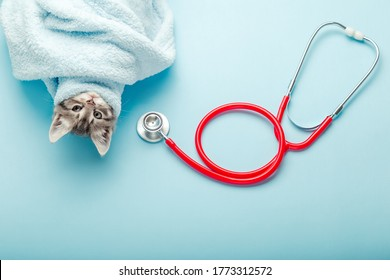 Kitten vet examining. Striped gray cat and stethoscope on color blue background. Kitten pet check up, vaccination in veterinarian animal clinic. Health care for domestic animal.