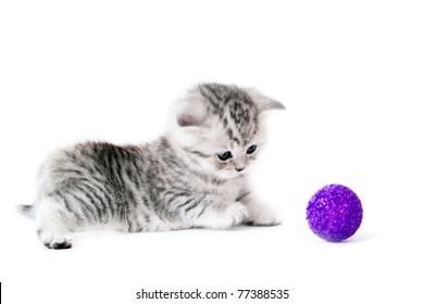 Kitten with violet ball