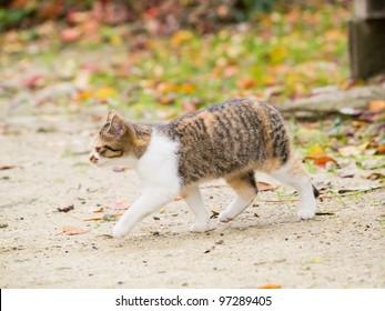 Kitten walk